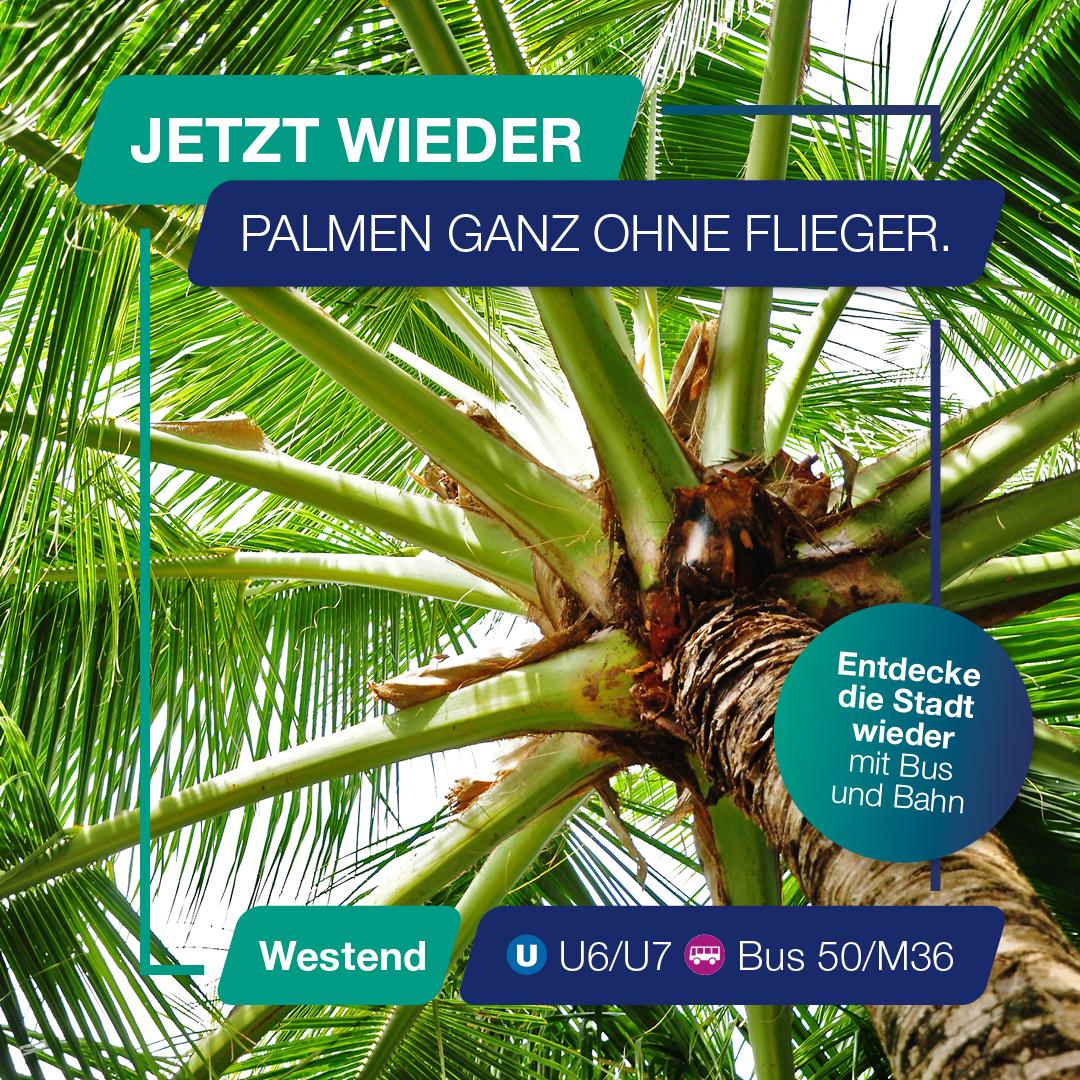 Besuch doch mal wieder den Palmengarten.